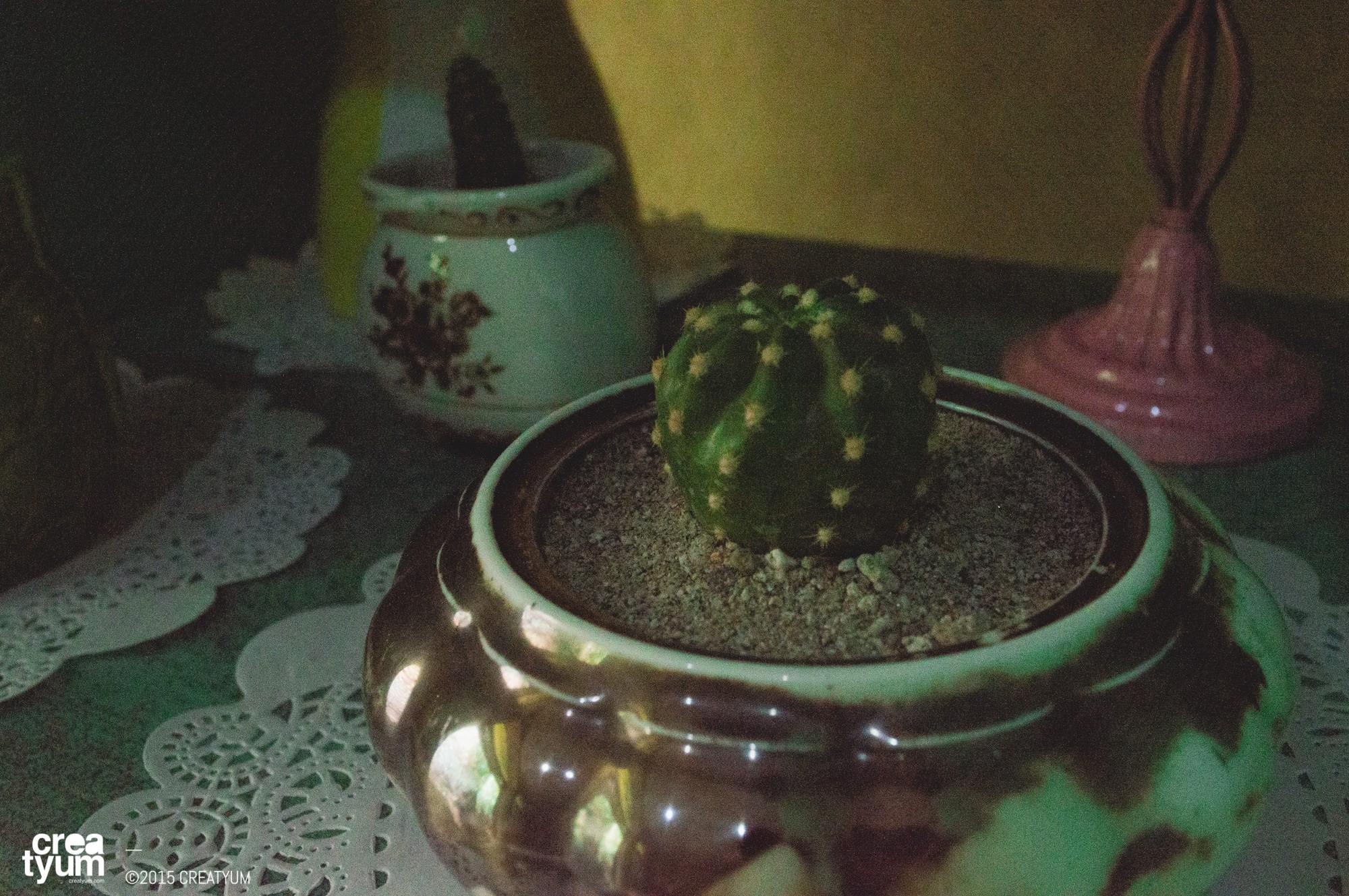 creatyum-cacti-love-02
